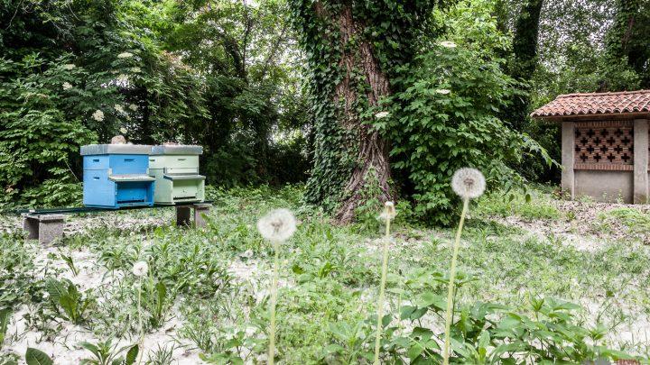 Posizionato il primo apiario urbano cittadino. Visita gratuita il 18 maggio in occasione della Giornata Mondiale delle Api.